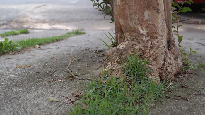 Regular caminho  rvore