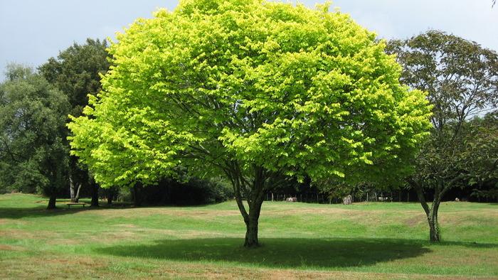 Regular tree